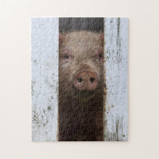 Cute But Sad Looking Baby Pig Looking Through Jigsaw Puzzle