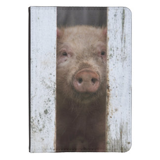 Cute But Sad Looking Baby Pig Looking Through Kindle Cover