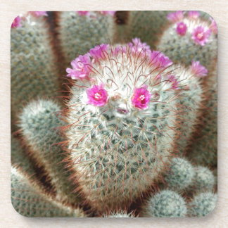 Cute Cactus w/ Pink Flower Face and Cacti Friends Drink Coasters