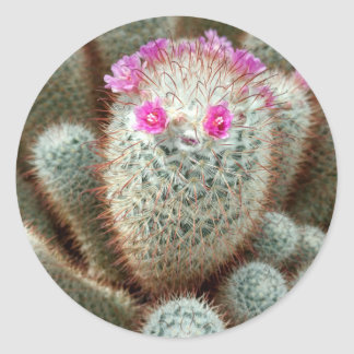 Cute Cactus w/ Pink Flower Face and Cacti Friends Round Sticker