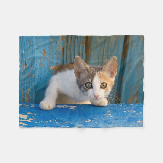 Cute Calico Cat Kitten Funny Curious Eyes Photo __ Fleece Blanket