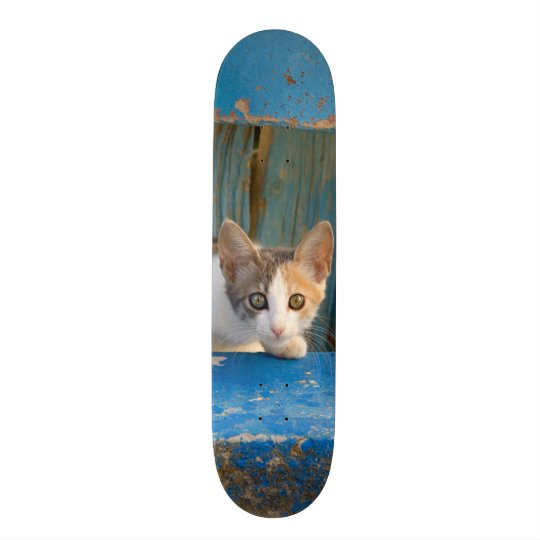 Cute Calico Cat Kitten Funny Curious Eyes Photo = Skate Board Deck