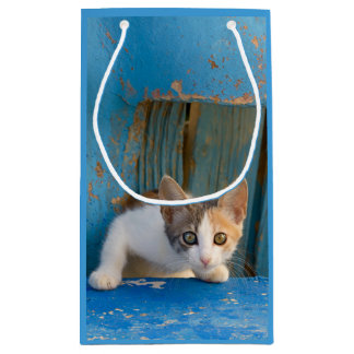 Cute Calico Cat Kitten Funny Curious Eyes Photo // Small Gift Bag