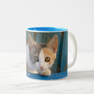Cute Calico Cat Kitten Funny Curious Eyes Photo -- Two-Tone Coffee Mug