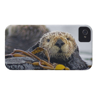 Cute California Sea Otter  Enhydra lutris iPhone 4 Case-Mate Case