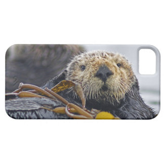 Cute California Sea Otter  Enhydra lutris iPhone 5 Case