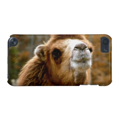 Cute Camel Face Wildlife Photography iPod Touch 5G Cover
