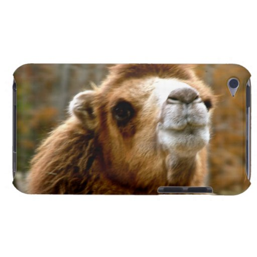 Cute Camel Face Wildlife Photography Barely There iPod Cover