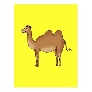 Cute camel postcard