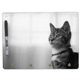 Cute Cat Dry-Erase Whiteboards