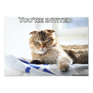 Cute cat invitation for a party