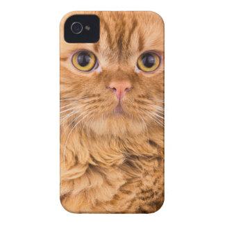 cute cat iPhone 4 case