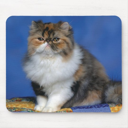 Cute Cat Kitten M003 Mouse Pad