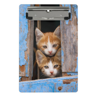 Cute Cat Kittens in a Blue Vintage Window Photo on