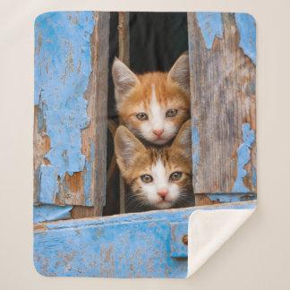Cute Cat Kittens in a Blue Vintage Window Photo .. Sherpa Blanket