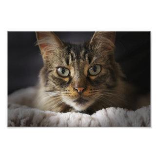 Cute Cat Portrait Photo Print