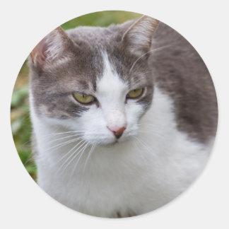 cute cat round sticker