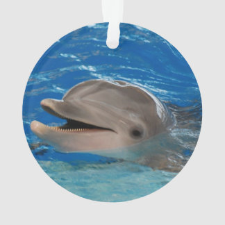 Cute Chattering Dolphin