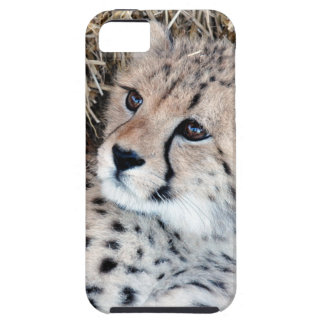 Cute Cheetah Cub Photo iPhone 5 Covers