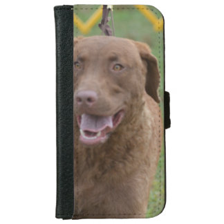 Cute Chesapeake Bay Retriever iPhone 6 Wallet Case
