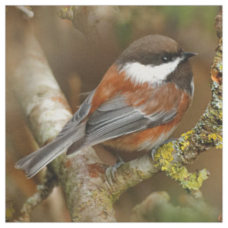 Cute Chestnut-Backed Chickadee on the Pear Tree Fabric
