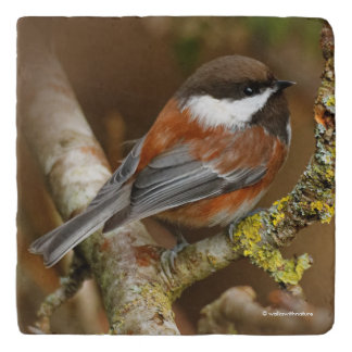 Cute Chestnut-Backed Chickadee on the Pear Tree Trivet