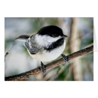 Cute Chickadee in Winter Card