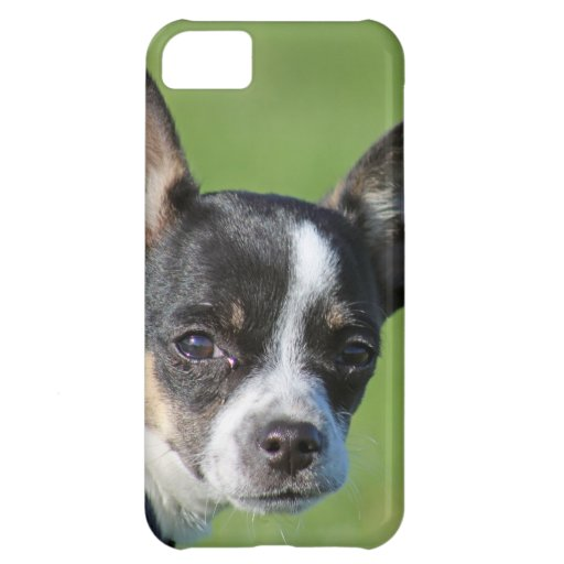 cute chihuahua iphone case cover for iPhone 5C