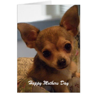 Cute Chihuahua: Mothers Day Card