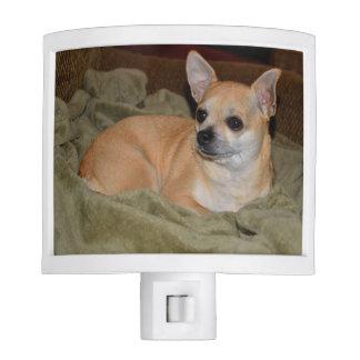 Cute Chihuahua Night Lites