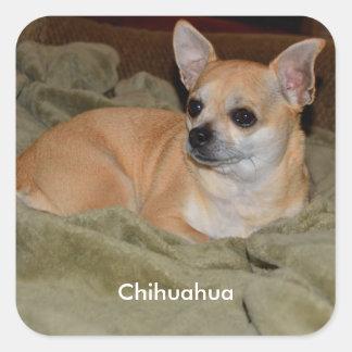 Cute Chihuahua Square Sticker