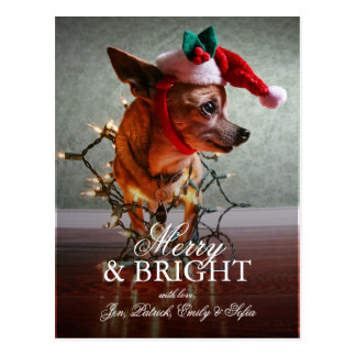 Cute Chihuahua With A Santa Hat Postcard