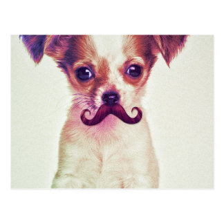 Cute Chihuahua With Purple Funny Mustache Post Card