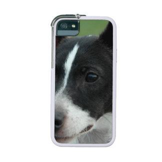 Cute Chihuahuas iPhone 5 Covers