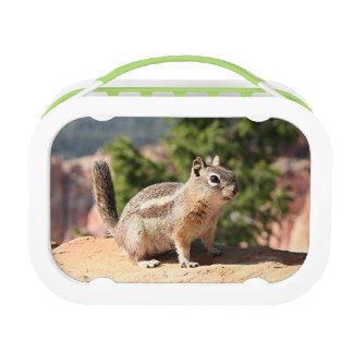 Cute Chipmunk, Bryce Canyon Lunchboxes