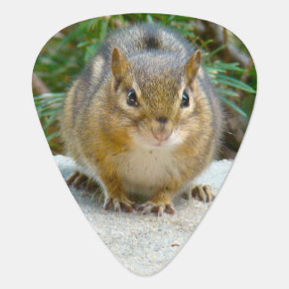 Cute Chipmunk Has His Eye On You Guitar Pick