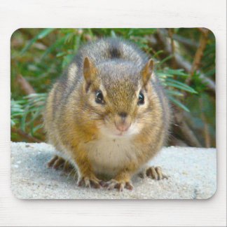 Cute Chipmunk Has His Eye On You Mouse Pad