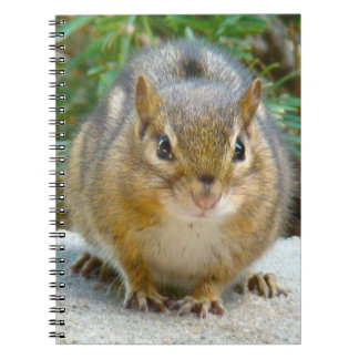 Cute Chipmunk Has His Eye On You Notebook
