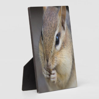 Cute chipmunk plaque