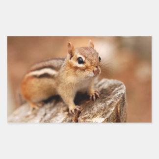 Cute Chipmunk Waiting Sticker