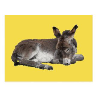 Cute chocolate donkey baby foal sleeping on yellow postcard