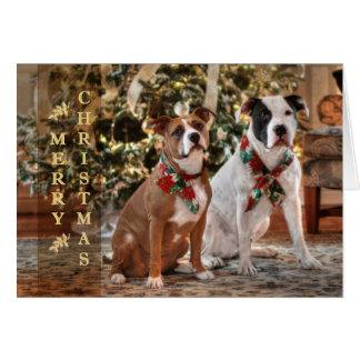 Cute Christmas Rescue Pitbull and America Bull Dog Greeting Card