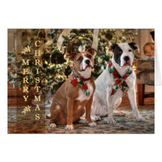 Cute Christmas Rescue Pitbull and America Bull Dog Note Card