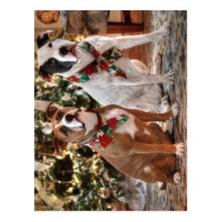 Cute Christmas Rescue Pitbull and America Bull Dog Postcard
