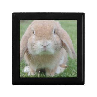 Cute Chubby Bunny Gift Box