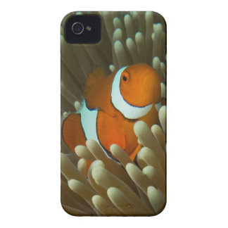 Cute Clownfish Great Barrier Reef Coral Sea iPhone 4 Case