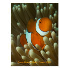 Cute Clownfish postcard