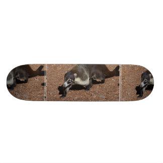 Cute Coati Skateboard Decks