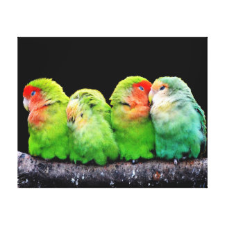 Cute colorful parrots sitting on a branch stretched canvas prints