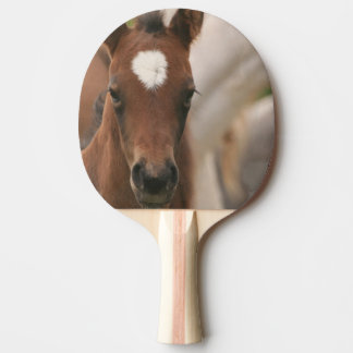 Cute Colt Ping Pong Paddle